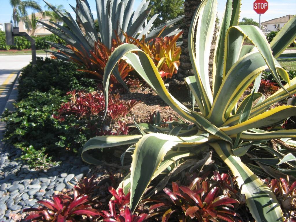 low maintenance & low water landscape planting