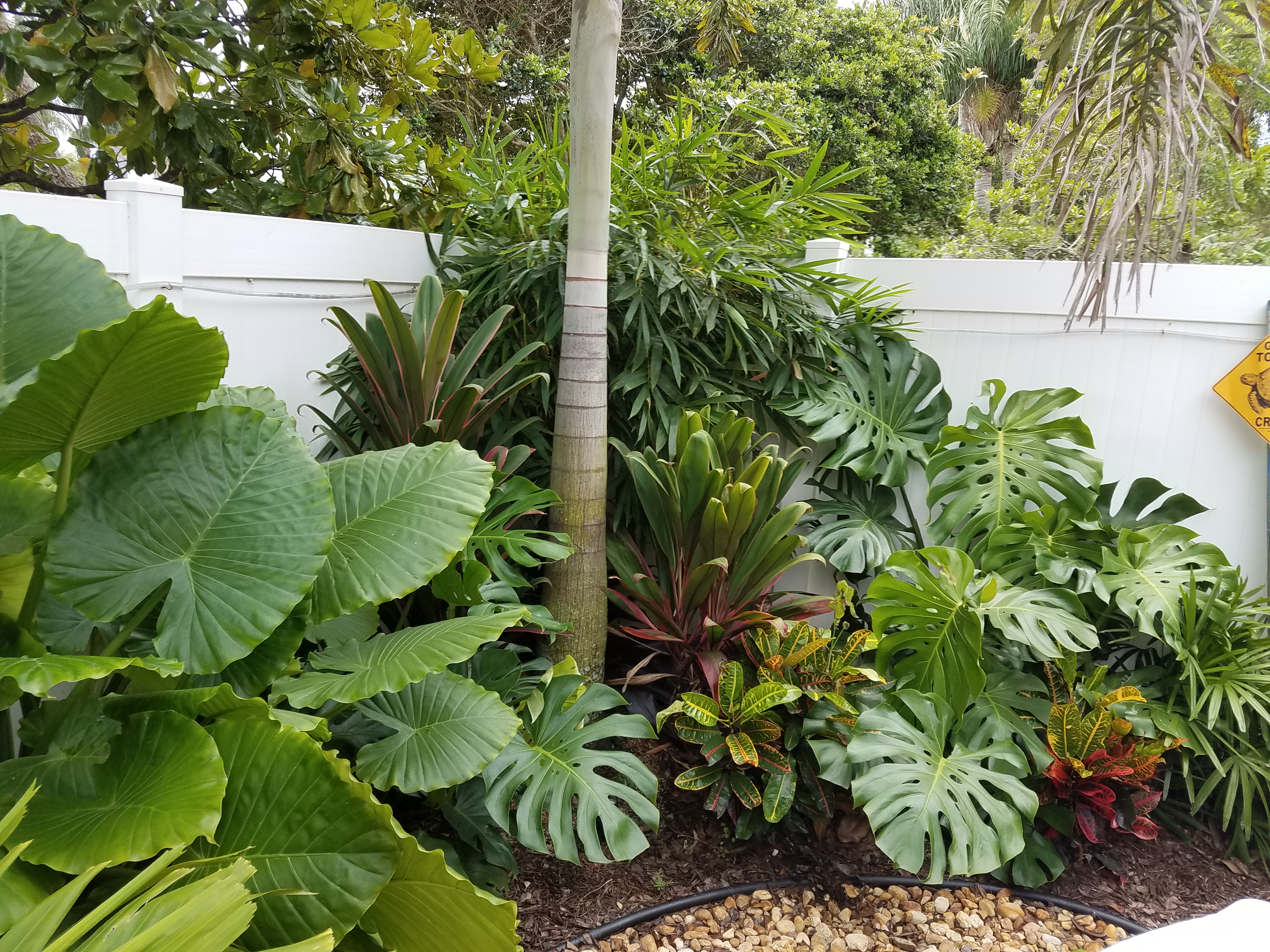 Tropical plants in landscapes west palm beach - Universal ...