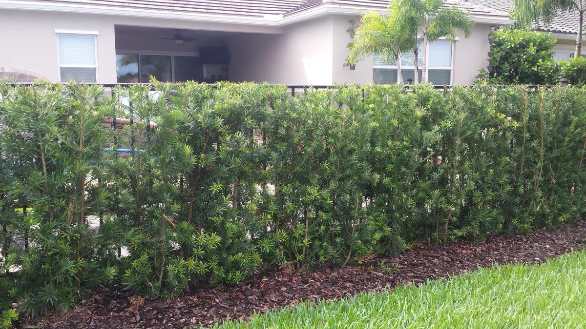 Hedges Universal Landscape Inc