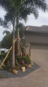 Royal Palm Tree  With Decorative Stacked Flagstone