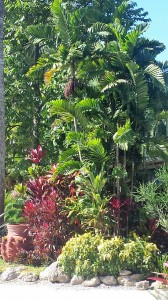 Shefferi Palm & Tropical Landscape