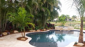 Tropical Pool Area, Spindle Palm