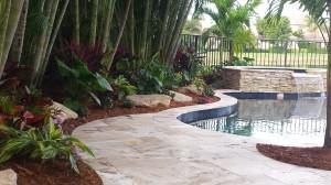 Areca Palms, Tropical Pool Landscape