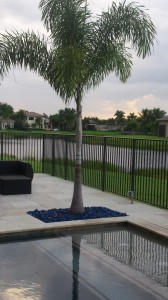 Chic Pool Area with Foxtail Palm