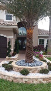 Sylvester Palm In Elevated Stone Planting Bed Accent