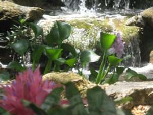 Waterfall & Lily Blooms