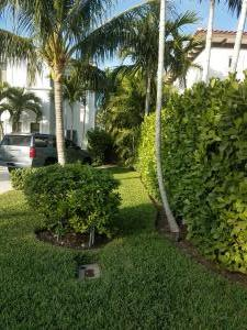 Clusia G. - hedge on property line