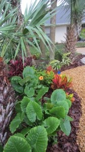 Tropical Green Plantings and Color
