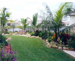 Backyard Garden Area with Palm Trees