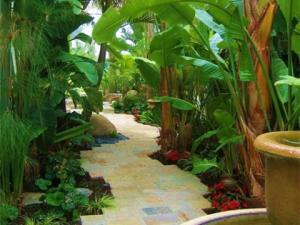 Tropical-pathway-white-birds-480x360